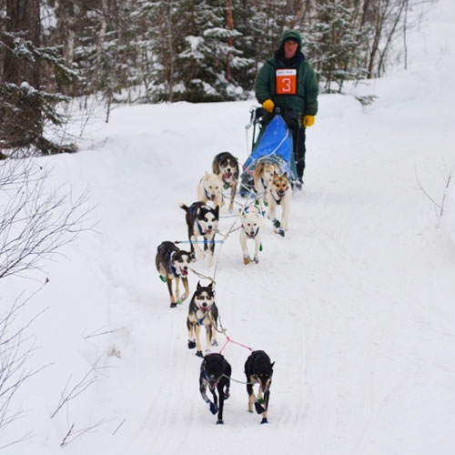 10 dog race