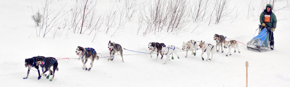 10 dog stage race