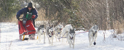 musher registration 6 dog race