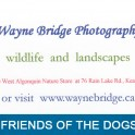 Wayne Bridge Photography