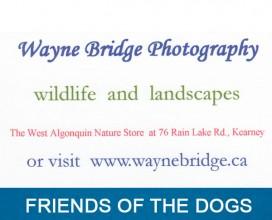 Wayne Bridge Photography