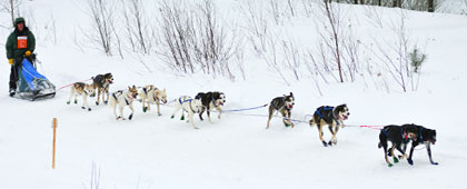musher registration 10 dog race