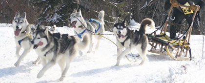 musher registration 4 dog race