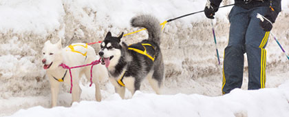 musher registration skijoring