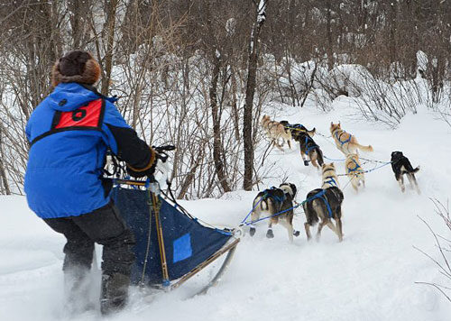 Sunday Dog Sled Race Results